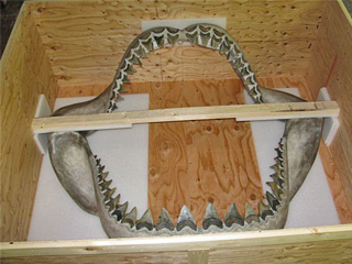 Crate artwork_152a_sharkjaw